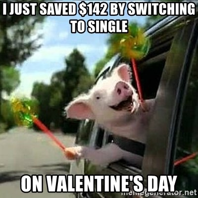 geico pig - I just saved $142 by switching to single on Valentine's day