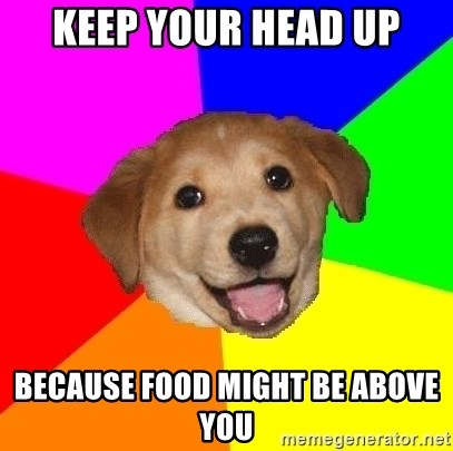 Advice Dog - keep your head up because food might be above you