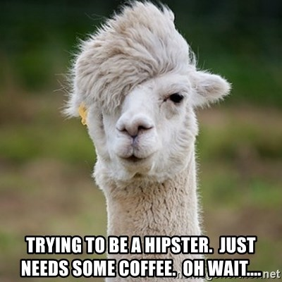 Hipster Llama - Trying to be a hipster.  Just needs some coffee.  Oh wait....