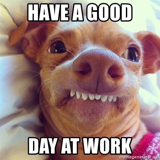 Have A Good Day At Work Phteven Dog Meme Generator