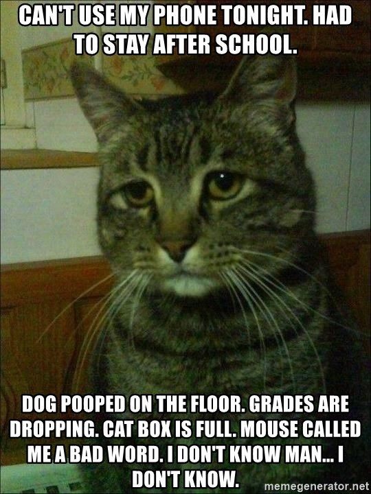 Depressed cat 2 - Can't use my phone tonight. Had to stay after school. Dog pooped on the floor. Grades are dropping. Cat box is full. Mouse called me a bad word. I don't know man... I don't know.