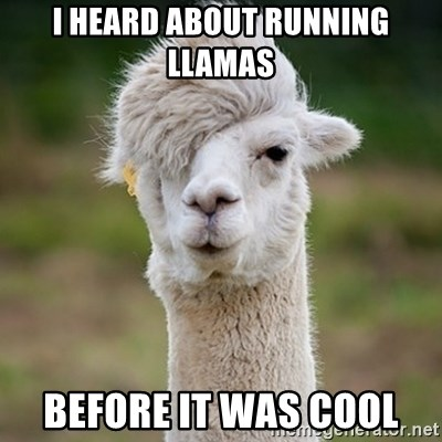 Hipster Llama - I heard about running llamas  Before it was cool