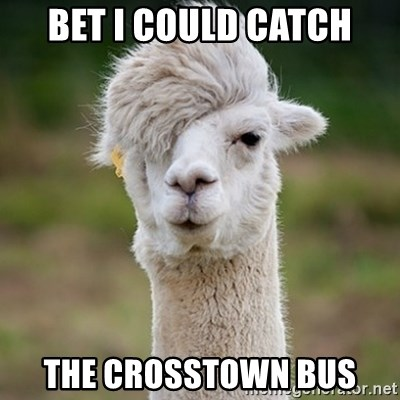 Hipster Llama - BET I COULD CATCH THE CROSSTOWN BUS