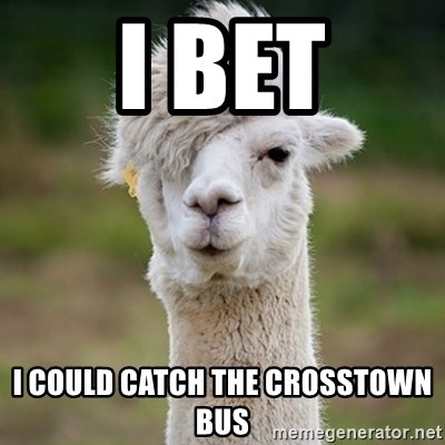 Hipster Llama - I BET I COULD CATCH THE CROSSTOWN BUS
