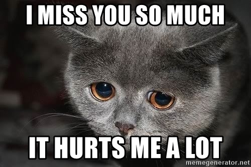 I Miss You So Much It Hurts Me A Lot Sadcat Meme Generator