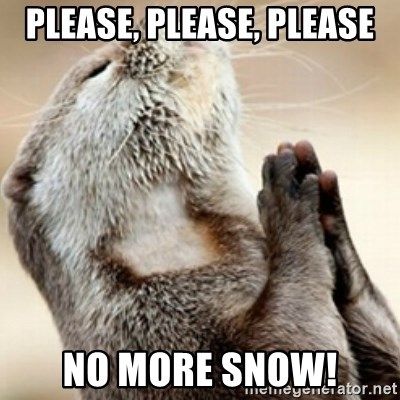 Praying Otter - Please, please, please No more snow!
