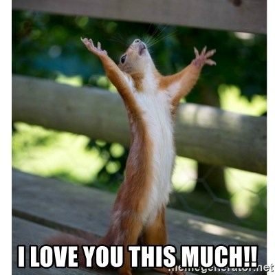 60624343 i love you this much!! thanking squirrel meme generator