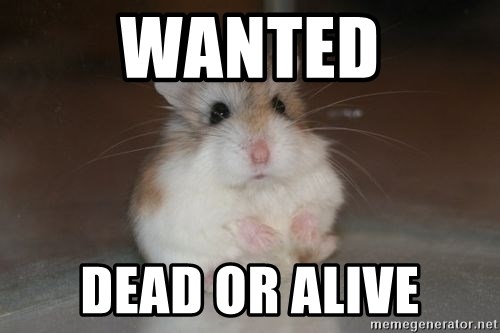 WANTED DEAD OR ALIVE - Handcrafting Disasters Hamster   Meme