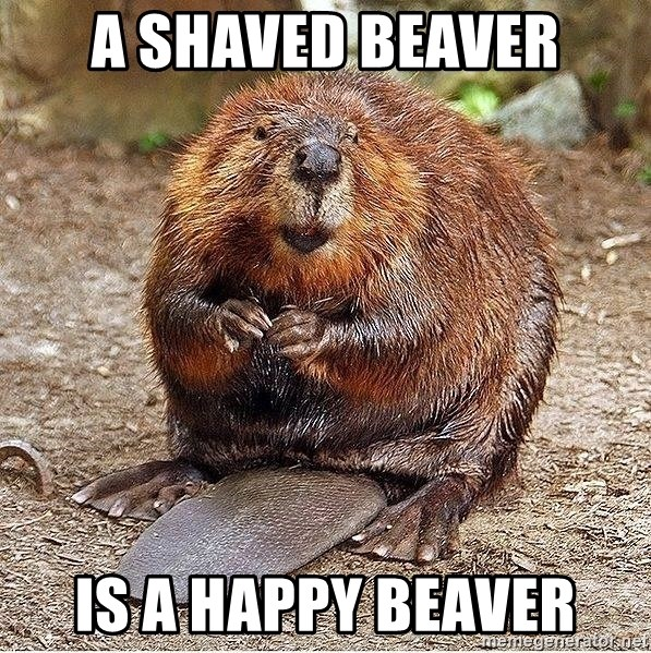 Shaved beaver images