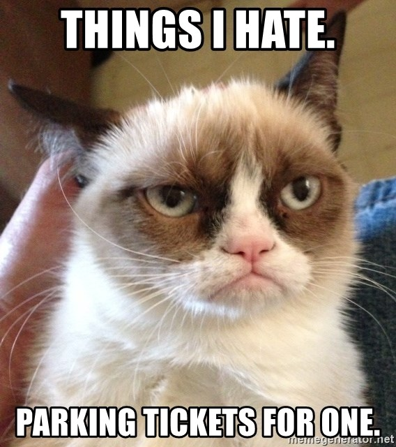 Grumpy cat before learning to pay a New York City Parking Ticket