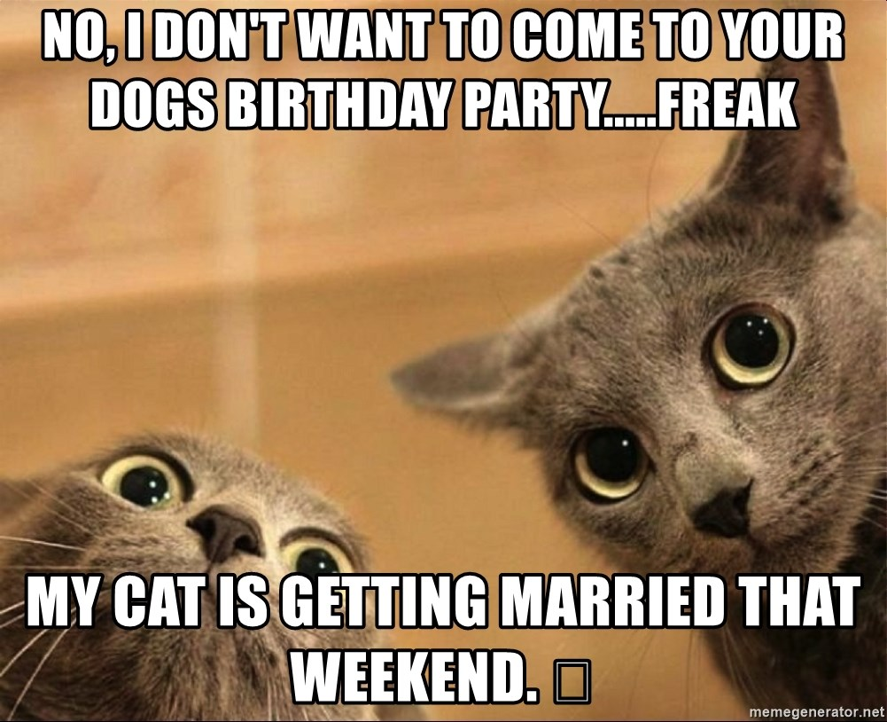 No, I don\u0027t want to come to your dogs birthday party