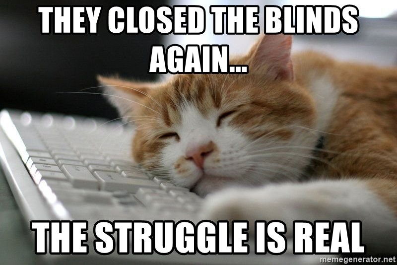 62883665 they closed the blinds again the struggle is real sleepy cat