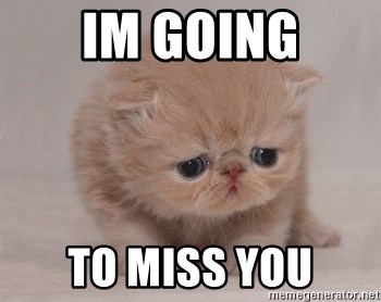 Im Going To Miss You Super Sad Cat Meme Generator