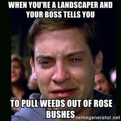 When Youre A Landscaper And Your Boss Tells You To Pull Weeds Out