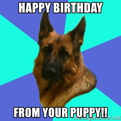 64115040 happy birthday from your puppy!! german shepherd meme generator
