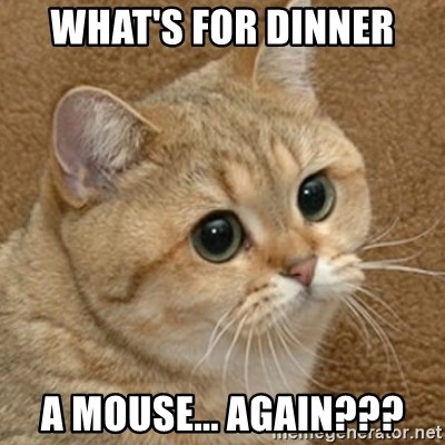 motherfucking game cat - what's for dinner a mouse... again???