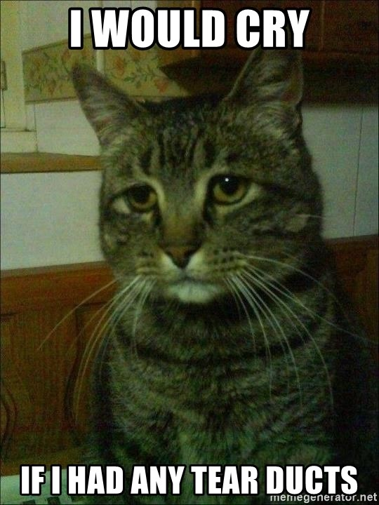 Depressed cat 2 - I WOULD CRY IF I HAD ANY TEAR DUCTS