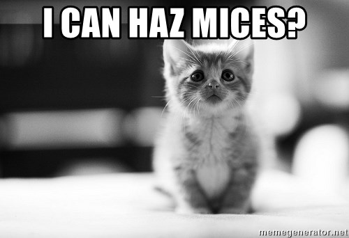 I can haz results nao? - I CAN HAZ MICES?