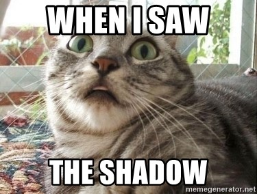 scared cat - when i saw  the shadow