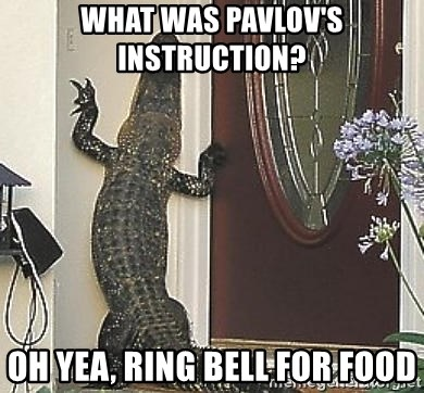 What Was Pavlovs Instruction Oh Yea Ring Bell For Food