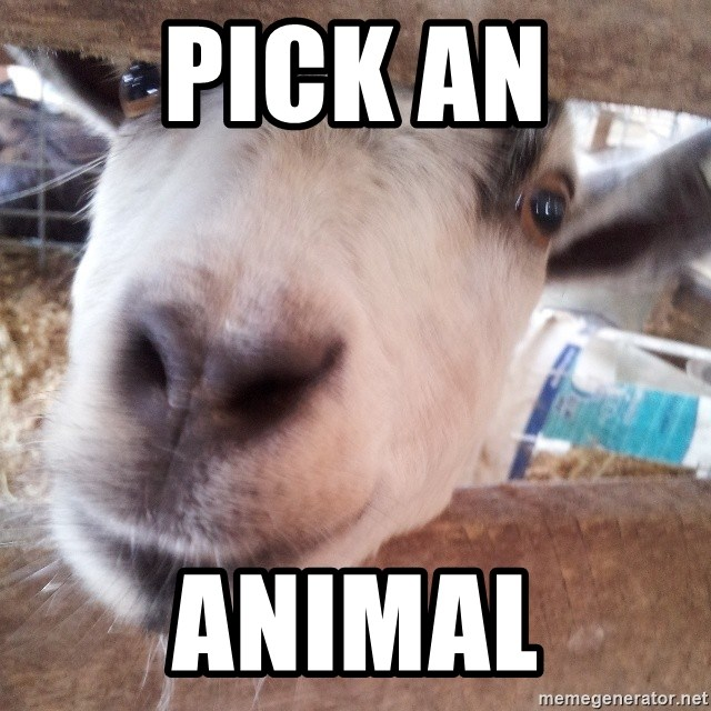 Animals with song quotes - pick an animal