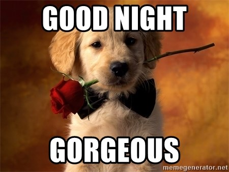 Good Night Gorgeous Cute Dog With Roses Meme Generator