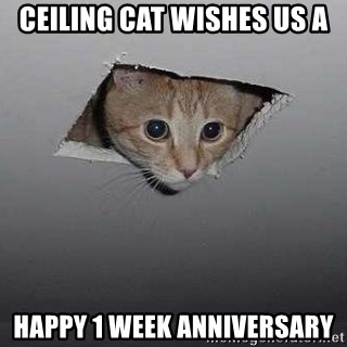ceiling cat wishes us a happy 1 week anniversary ceiling cat meme generator