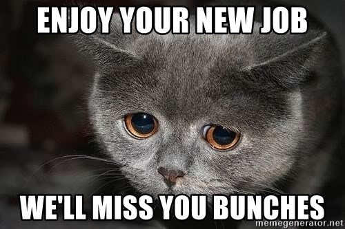 66539829 enjoy your new job we'll miss you bunches sad cat meme generator,We Miss You Meme