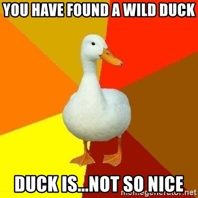 Technologyimpairedduck - You have found a wild duck duck is...not so nice