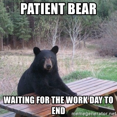 Patient Bear Waiting For The Work Day To End Patient Bear Meme
