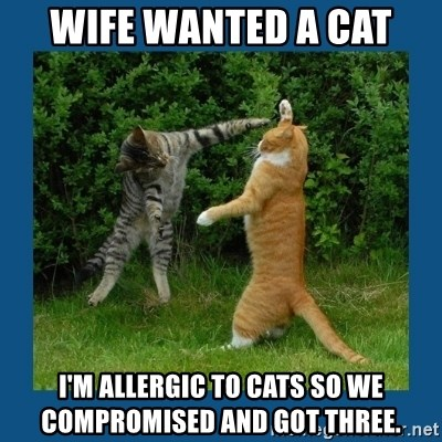 wife wanted a cat im allergic to cats so we compromised and got three wife wanted a cat i'm allergic to cats so we compromised and got