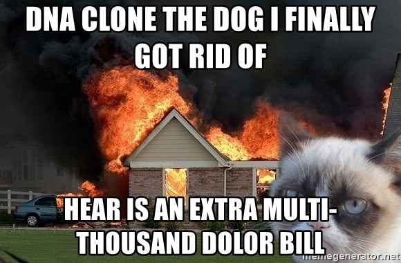 grumpy cat 8 - DNA Clone the dog I finally got rid of Hear is an extra multi-thousand dolor bill