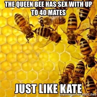 Honeybees - The Queen Bee has sex with up to 40 mates Just like Kate