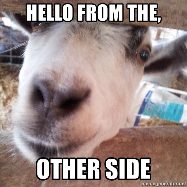 Animals with song quotes - hello from the, Other side