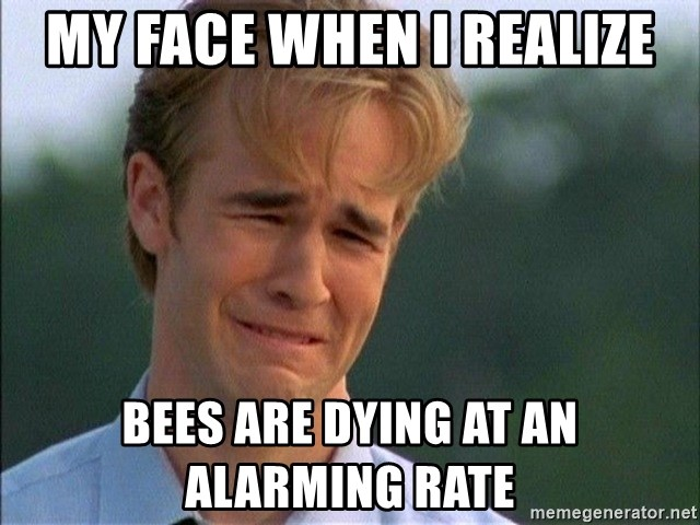 67997225 my face when i realize bees are dying at an alarming rate dawson