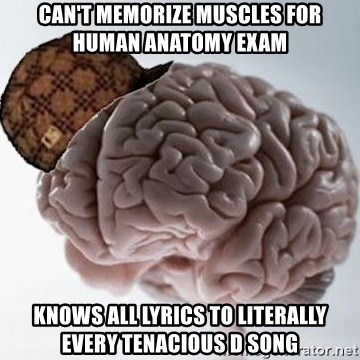 Cant Memorize Muscles For Human Anatomy Exam Knows All Lyrics To