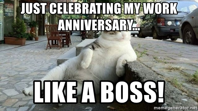 Anniversary cat memes cat.best of the funny meme