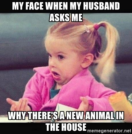 IDK Girl - my face when my husband asks me why there's a new animal in the house