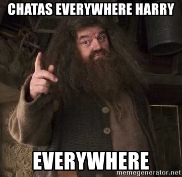 Hagrid - Chatas everywhere Harry  Everywhere