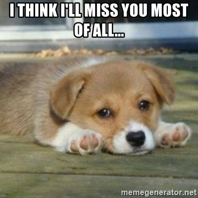 I Think Ill Miss You Most Of All Sad Puppy Face Meme Generator