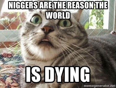 scared cat - Niggers are the reason the world Is dying