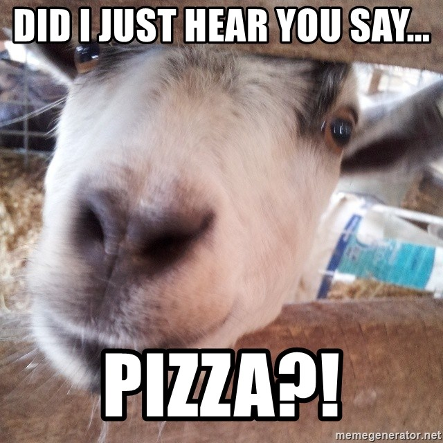 Animals with song quotes - Did i just hear you say... PIZZA?!