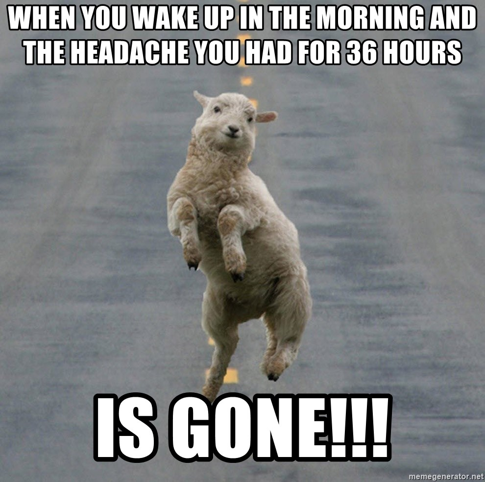 Excited Sheep - When you wake up in the morning and the headache you had for 36 hours is GONE!!!