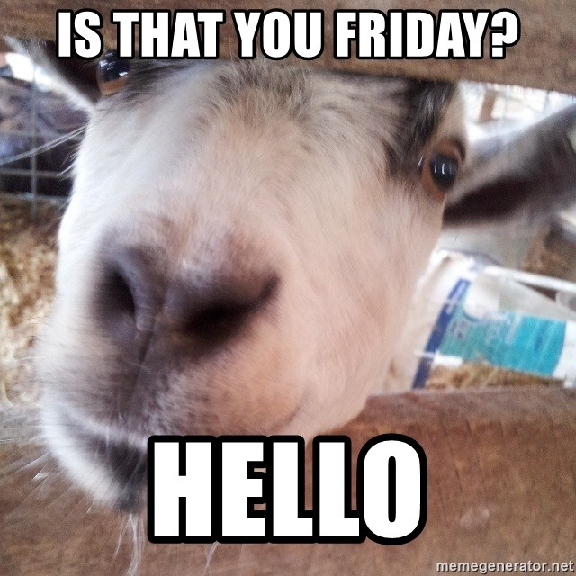 Animals with song quotes - Is that you Friday? Hello