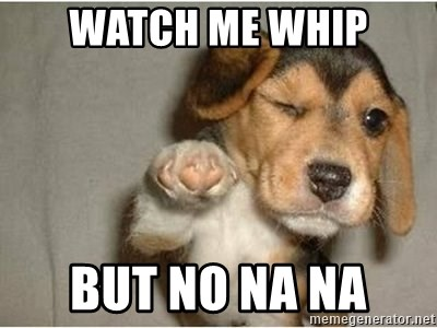funny winking dog - watch me whip but no na na
