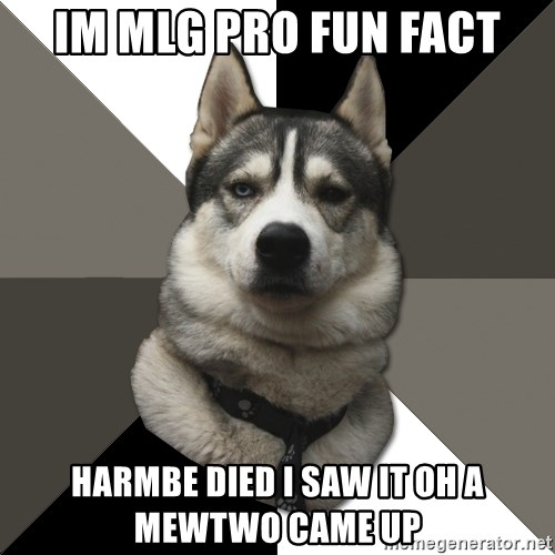 Wise Husky - im mlg pro fun fact Harmbe died i saw it oh a mewtwo came up