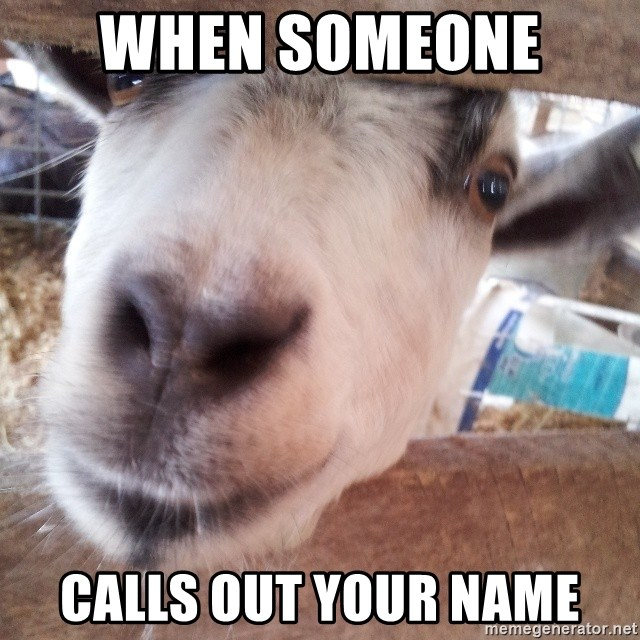 Animals with song quotes - When someone  calls out your name