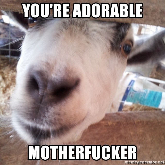 Animals with song quotes - You're adorable motherfucker
