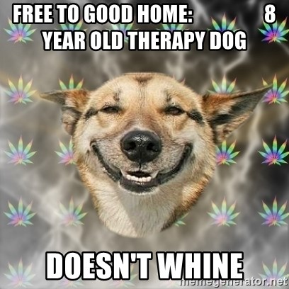Free To Good Home 8 Year Old Therapy Dog Doesn T Whine