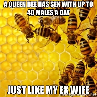 Honeybees - A queen bee has sex with up to 40 males a day Just like my ex wife